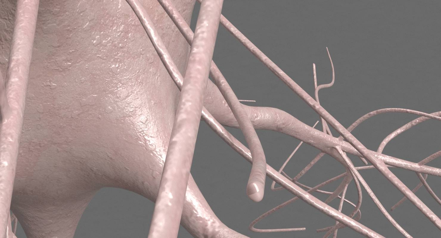 Motoric Neuron