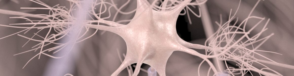 Motoric Neuron